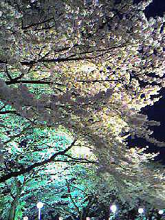 としまえん夜桜1.jpg